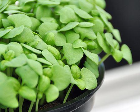 Bild för kategori Kryddväxter