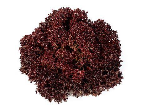 Bild för kategori Lollo rosso