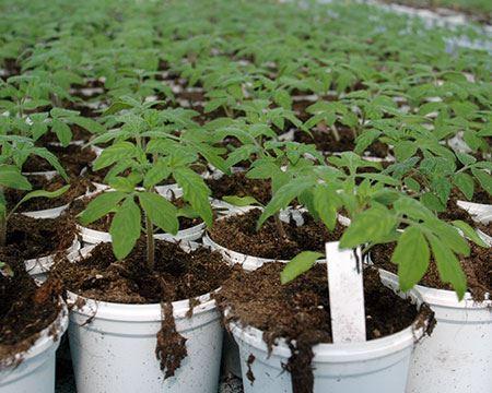 Bild för kategori Småplantprod.