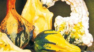 Picture of Prydnadspumpa Autumn Wings medium