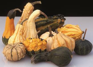Picture of Prydnadspumpa Harrowsmith Select, ekologiskt odlat frö
