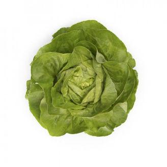 Picture of Huvudsallat Ulmo RZ, ekologiskt odlad frö