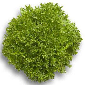 Picture of Salanovakrisp Expertise RZ, ekologiskt odlat frö