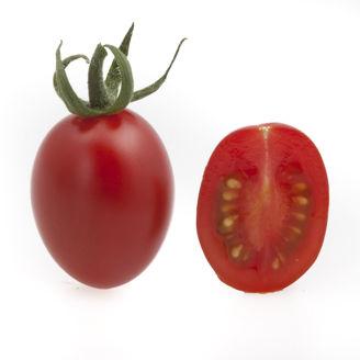 Picture of Tomat Solarino RZ F1